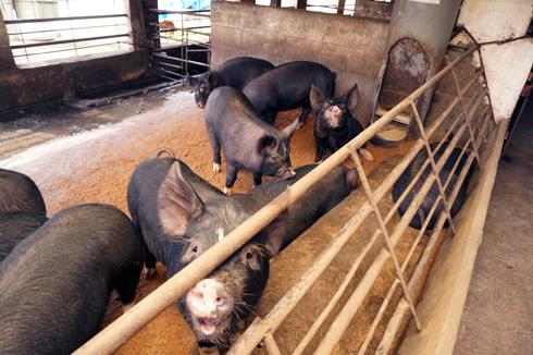 大切な家畜を守るために知っておきたい養豚・養鶏場の防鳥ネット対策