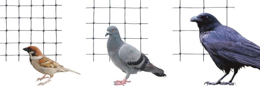 対象の鳥に適したサイズ選びが重要