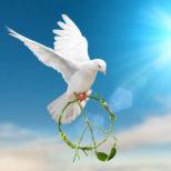 ハトが平和の象徴とされるのはなぜ?