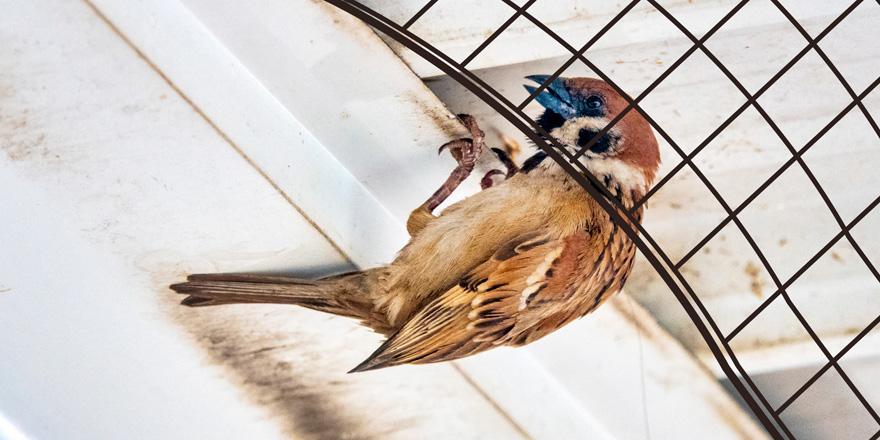 何が原因?防鳥ネットを張ったのに鳥が侵入している!