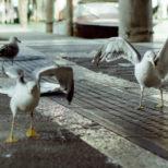 防鳥剣山にまつわるトラブル例② カモメと手作り剣山