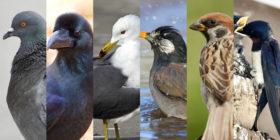 鳥害対策 主要6種の基本と防鳥法 ハト/カラス/カモメ/ムクドリ/スズメ/ツバメ