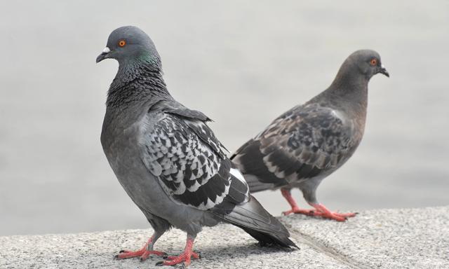 鳥害対策防鳥対策カラス