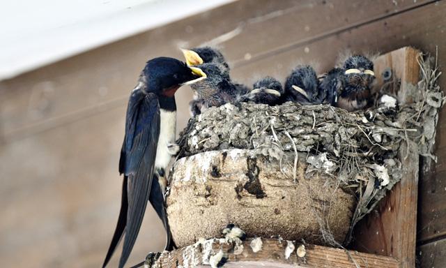 鳥害対策防鳥対策ツバメ