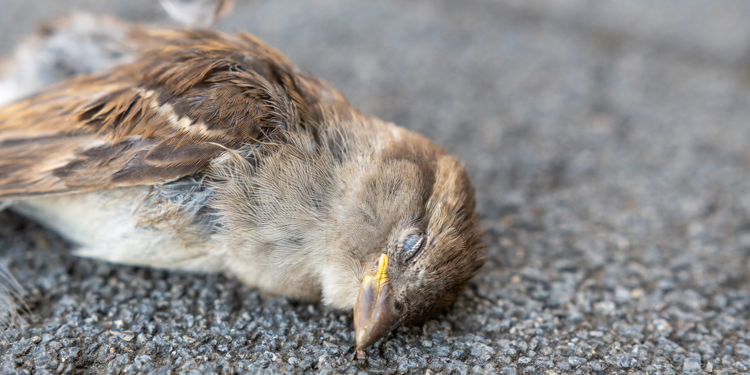 全国各地で起きている鳥の大量死の謎