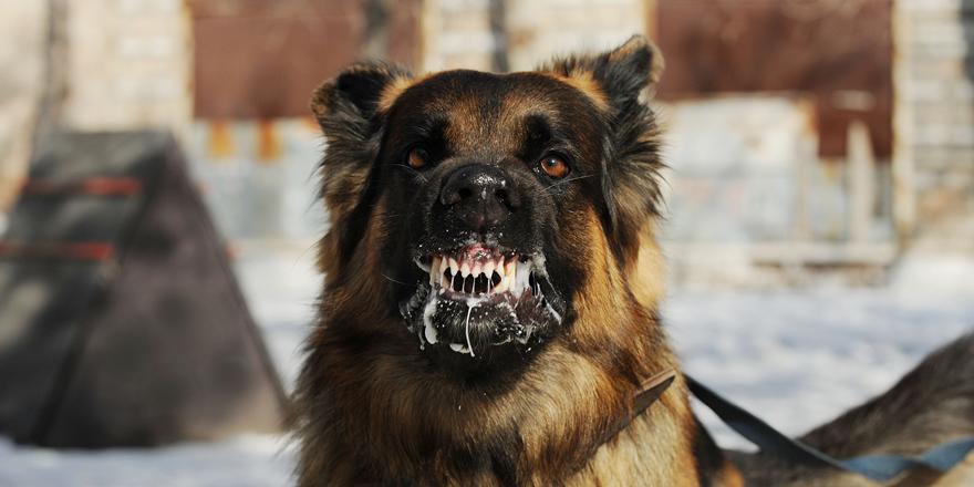 こんなに怖い!コウモリと狂犬病ウィルス